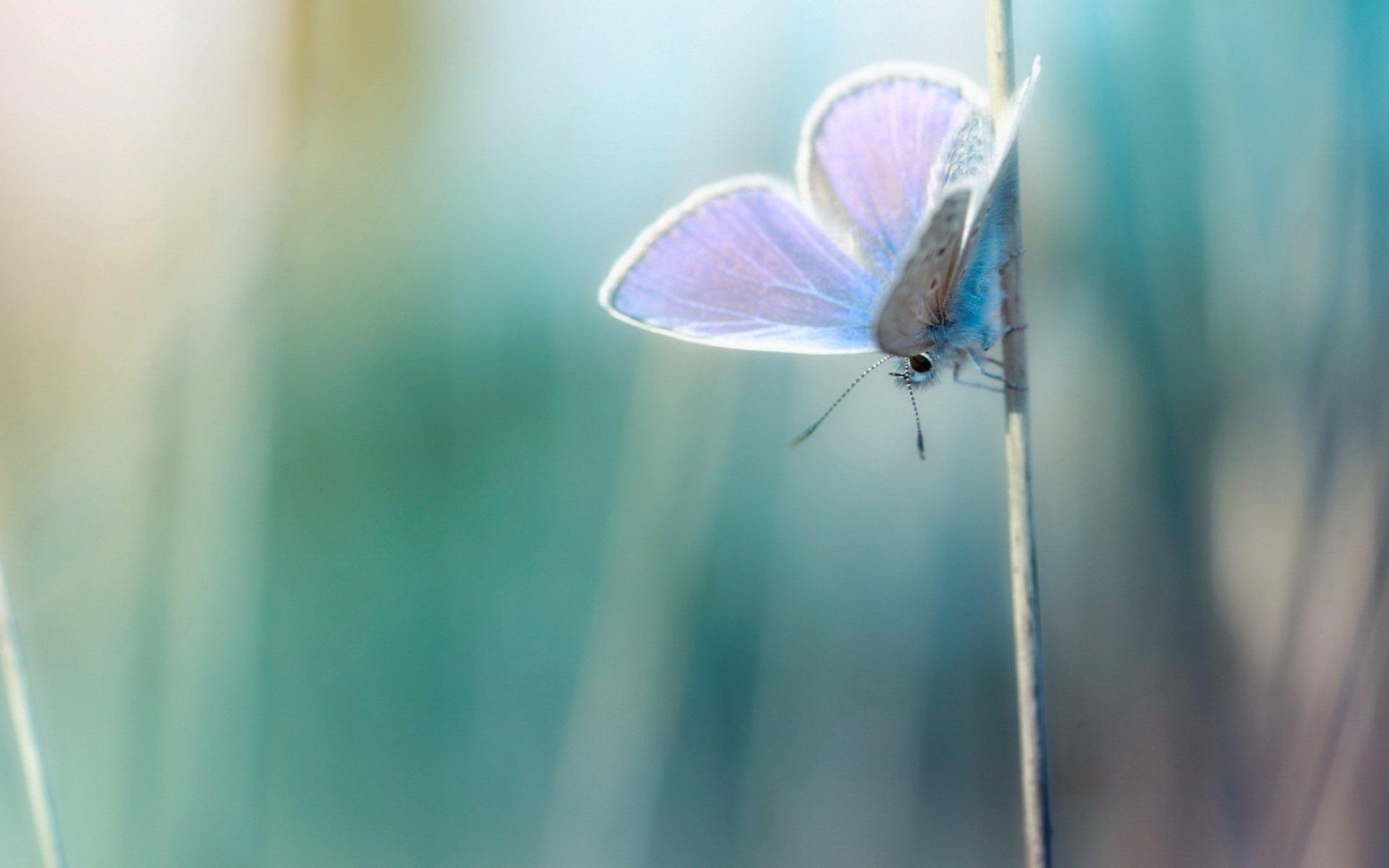"""停在枝头上的紫色小清新蝴蝶PPT背景图片免费下载是由PPT宝藏(www.pptbz.com)会员zengmin上传推荐的淡雅PPT背景图片, 更新时间为2017-01-13,素材编号119090。 蝶,通称为""""蝴蝶"""",也称蛱(ji)蝶、胡蝶、浮蝶儿等,节肢动物门、昆虫纲、鳞翅目、锤角亚目动物的统称。 蝶,通称为""""蝴蝶"""",全世界大约有14000余种,大部分分布在美洲,尤其在亚马逊河流域品种最多,在世界其他地区除了南北极寒冷地带以外,都有分布,在亚洲台湾也以蝴蝶品种繁多著名。蝴蝶一"""