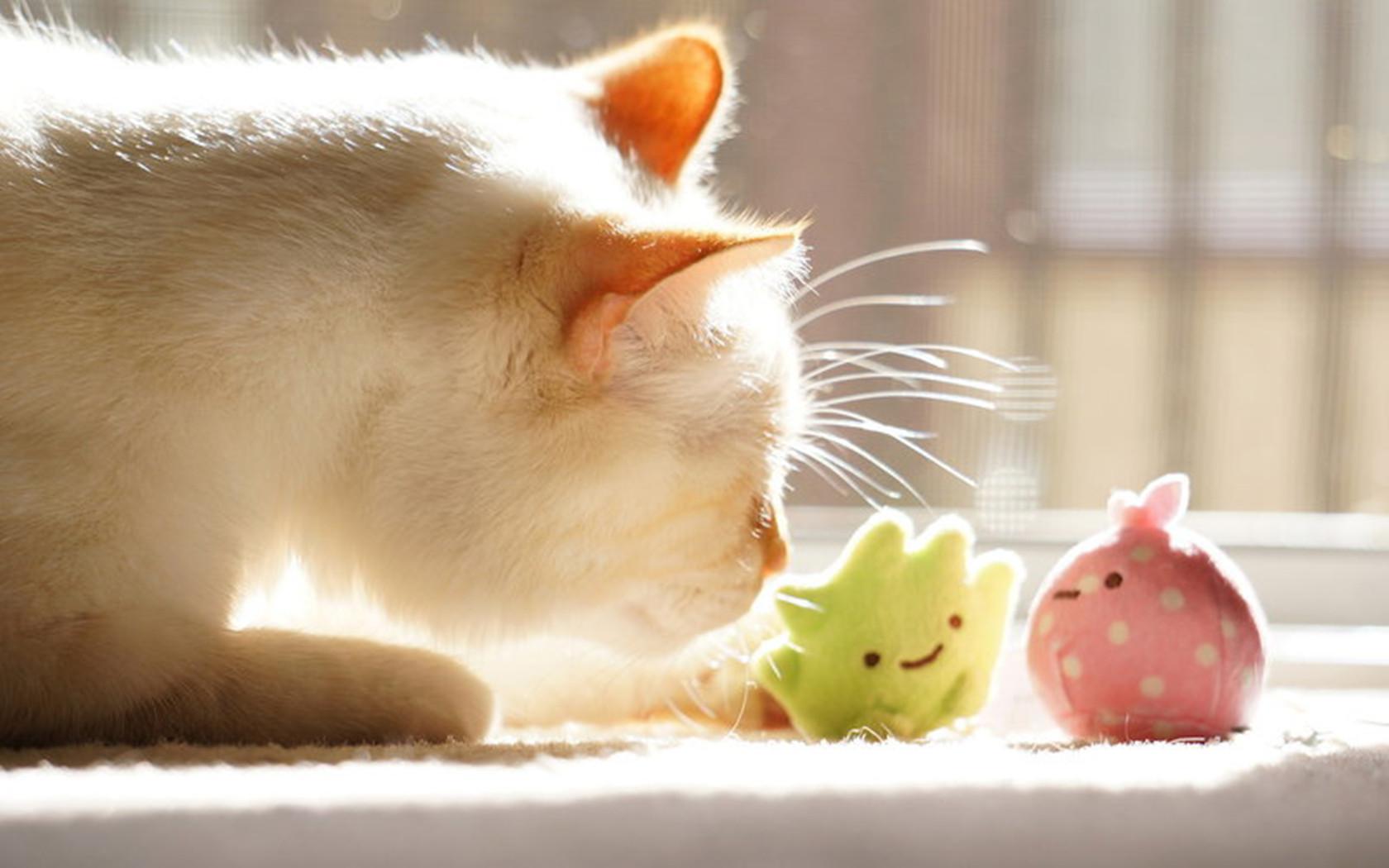 可爱摆件创意摄影唯美猫ppt背景图片下载