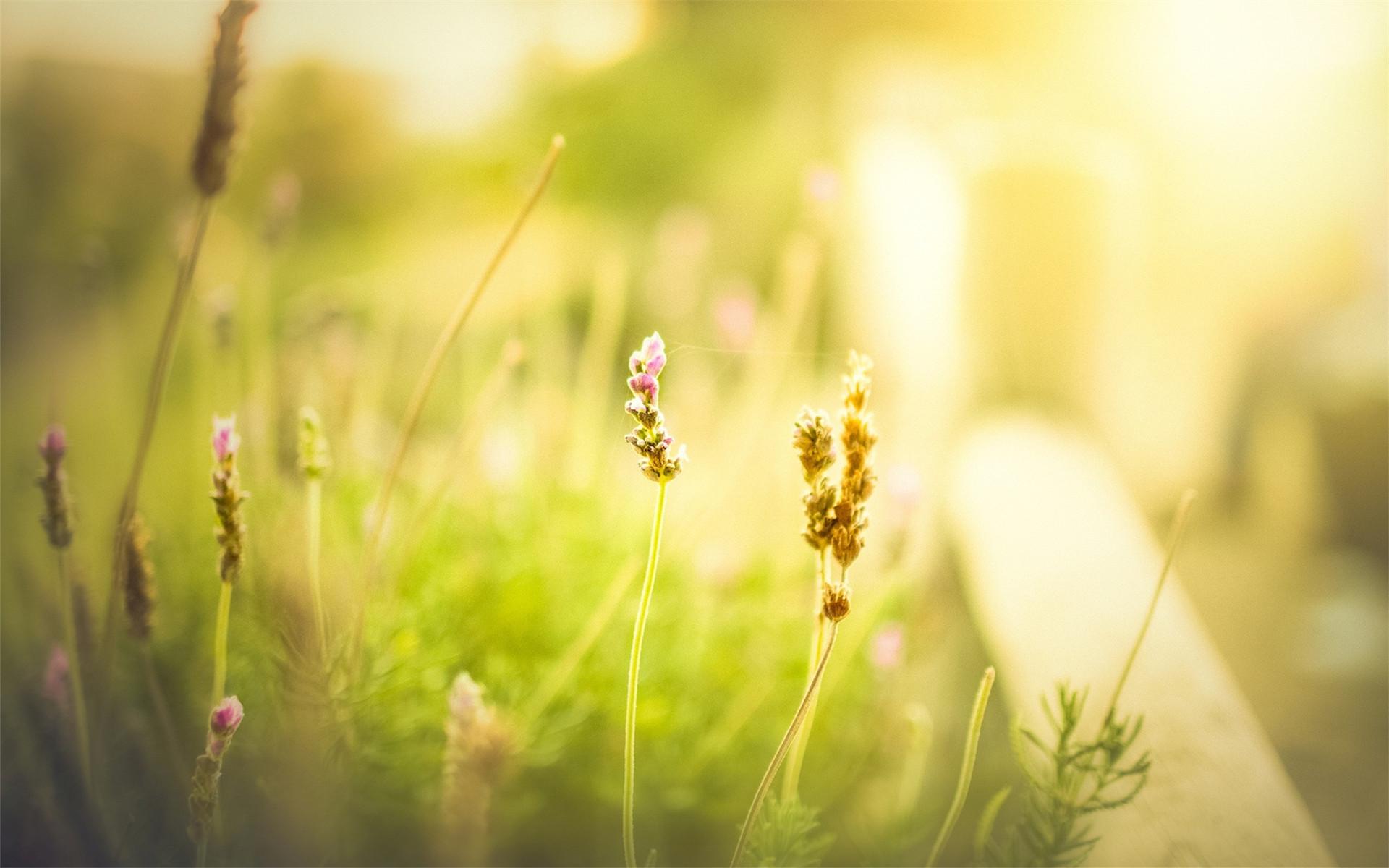 > 唯美小清新大自然花草植物ppt背景图片  上一页:精选可爱的小熊挂件