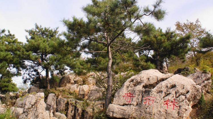 首页 ppt背景 风景ppt背景图片 > 天津元古奇石林ppt背景图片  上一页