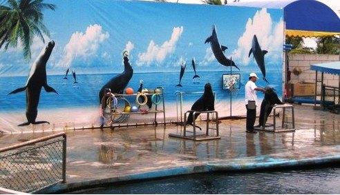 天涯热带海洋动物园ppt背景图片下载