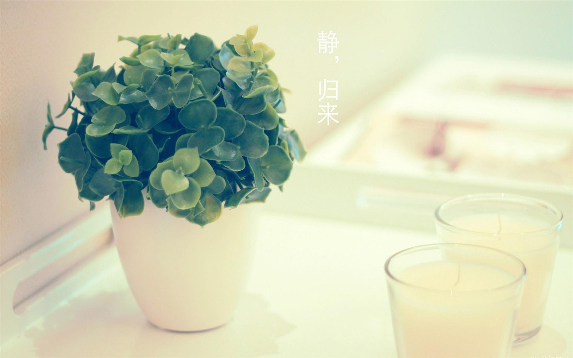 小清新盆栽摄影ppt背景图片下载