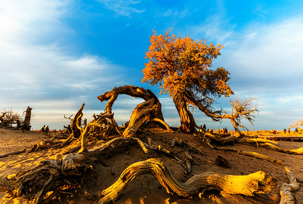 怪树林PPT背景图片免费下载是由PPT宝藏(www.pptbz.com)会员zengmin上传推荐的风景PPT背景图片, 更新时间为2017-01-08,素材编号118168。 怪树林在额济纳旗达来呼布镇西南28公里处,怪树林实际上是大片胡杨树枯死而形成的。 怪树林实际上是大片胡杨树枯死而形成的。胡杨是一种奇特的树种,生命力极强。近代以来,由于人类的不合理开发,极大的破坏了胡杨赖以生存的生态环境、特别是额济纳河断流,沿河两岸的大片胡杨林因缺水而枯死。胡杨特有的耐腐特性,使大片枯死的胡杨树干依然直立在戈壁荒