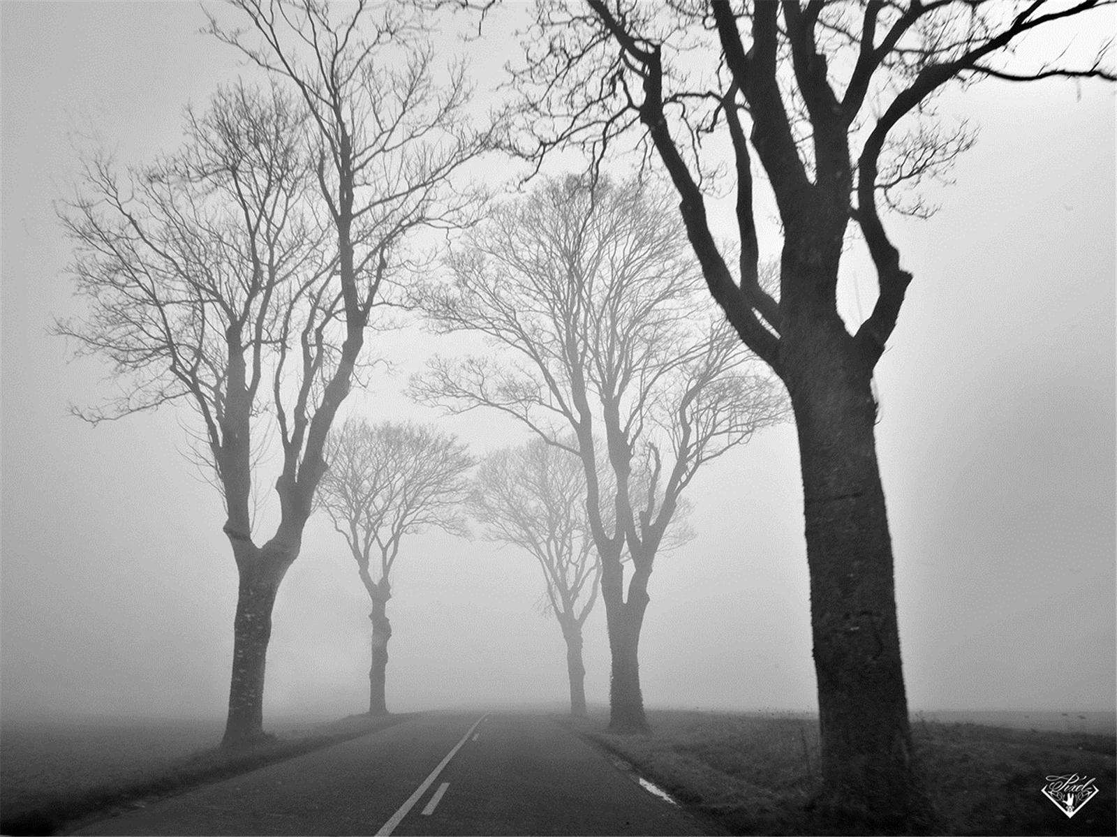 森林黑白静谧中心对称ppt背景图片下载