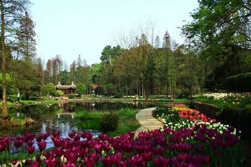 首页 ppt背景 风景ppt背景图片 > 武汉植物园ppt背景图片  上一页