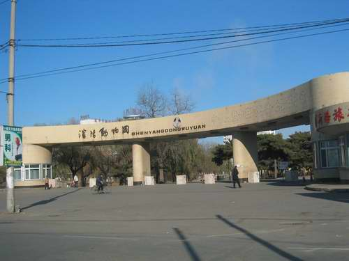 沈阳动物园ppt背景图片下载