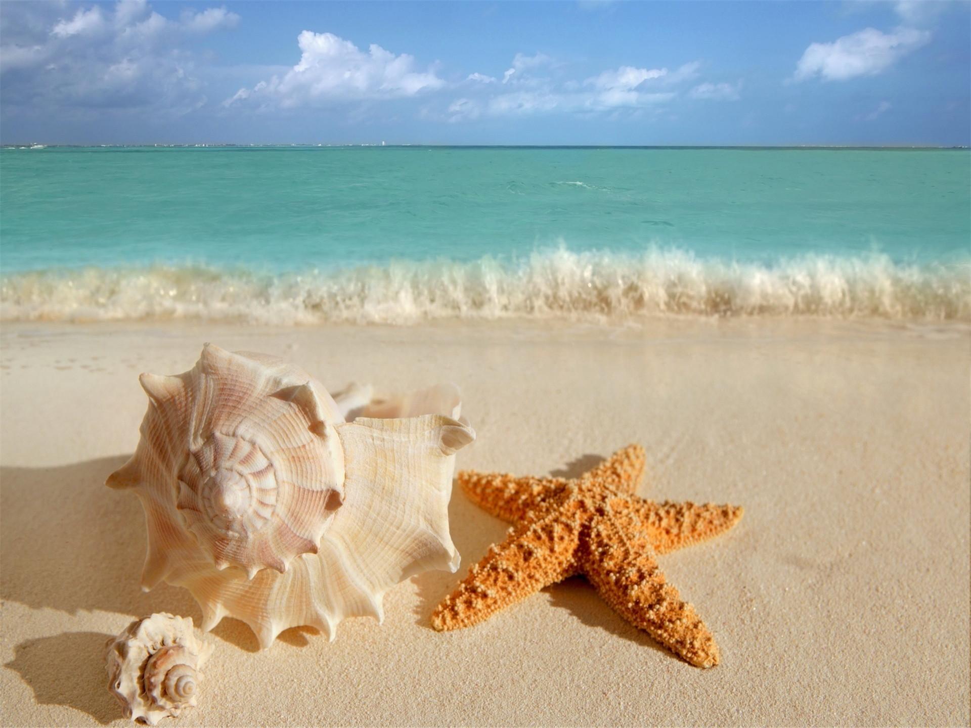 沙滩上的海星贝壳唯美创意摄影ppt背景图片下载
