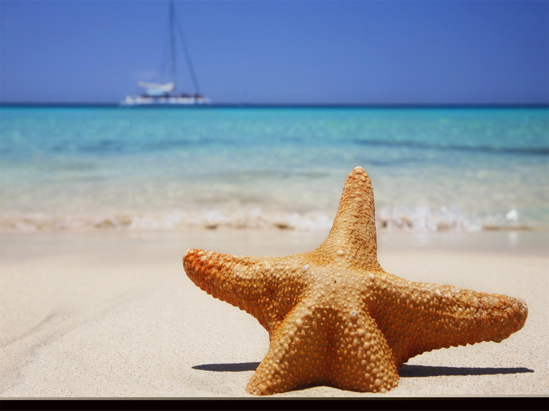"""海星沙滩PPT背景图片免费下载是由PPT宝藏(www.pptbz.com)会员zengmin上传推荐的简约PPT背景图片, 更新时间为2017-01-22,素材编号120674。 海星与海参、海胆同属棘皮动物。它们通常有五个腕 但也有四六个,体扁平,多呈星形。整个身体由许多钙质骨板借结缔组织结合而成,体表有突出的棘、瘤或疣等附属物。有的多达50条腕,在这些腕下侧并排长有4 列密 密的管足。 身体表面有许多凸凹不平的""""疙瘩"""",叫做棘状突起,是由钙质的内骨骼突出表面海星体内结构皮肤而形"""