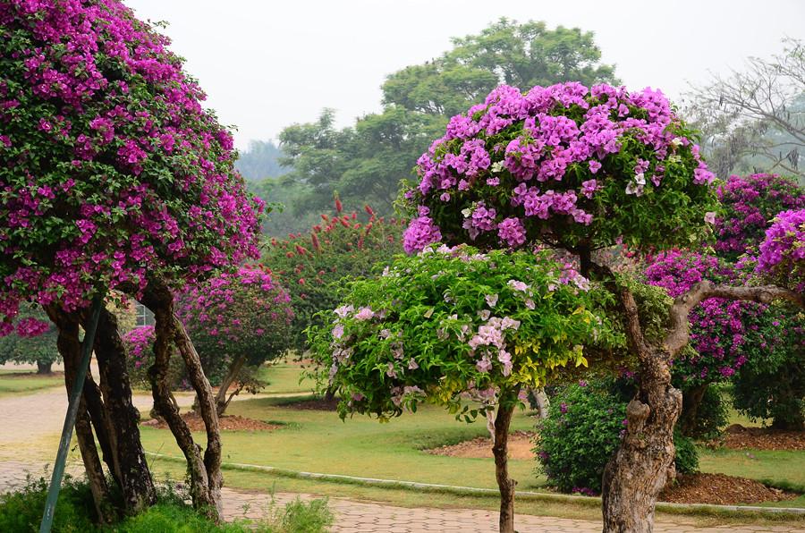 首页 ppt背景 风景ppt背景图片 > 热带花卉园ppt背景图片  上一页