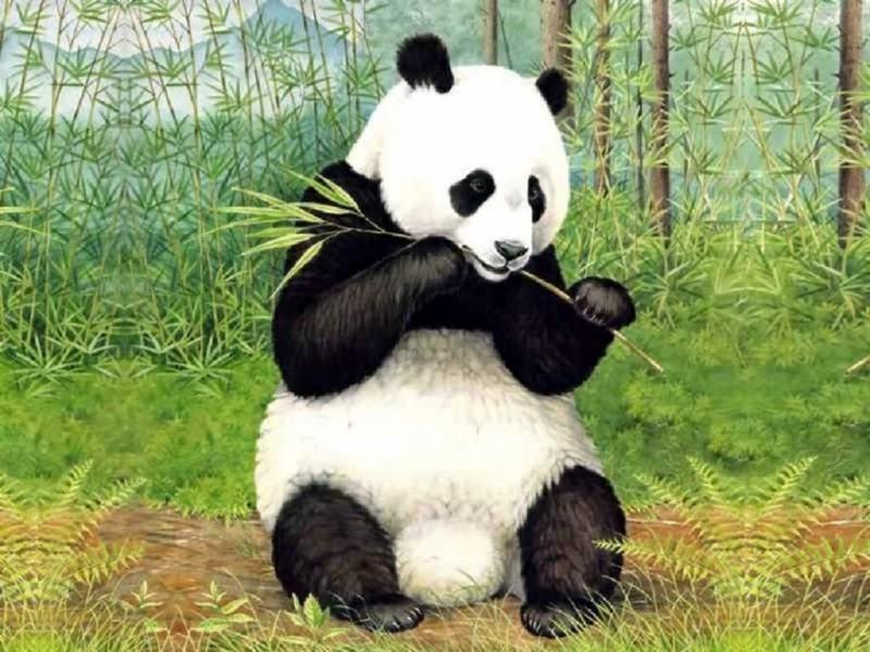 熊猫ppt背景图片下载_幻灯片模板免费下载