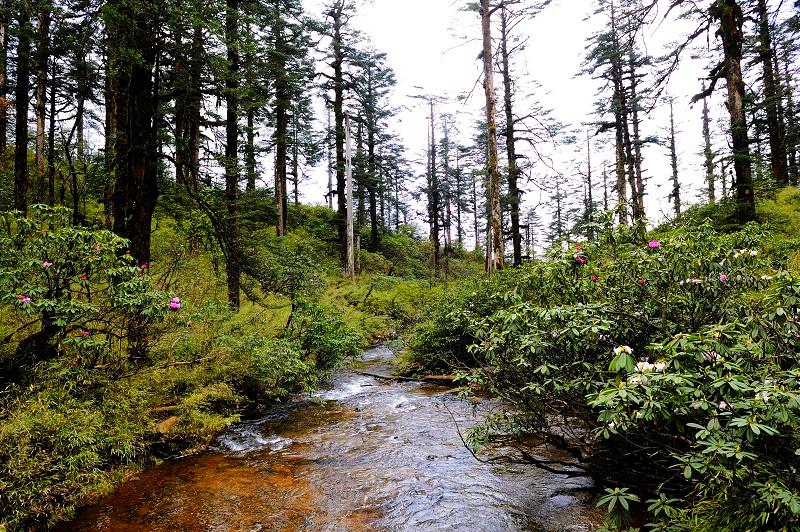 瓦屋山森林公园ppt背景图片下载图片