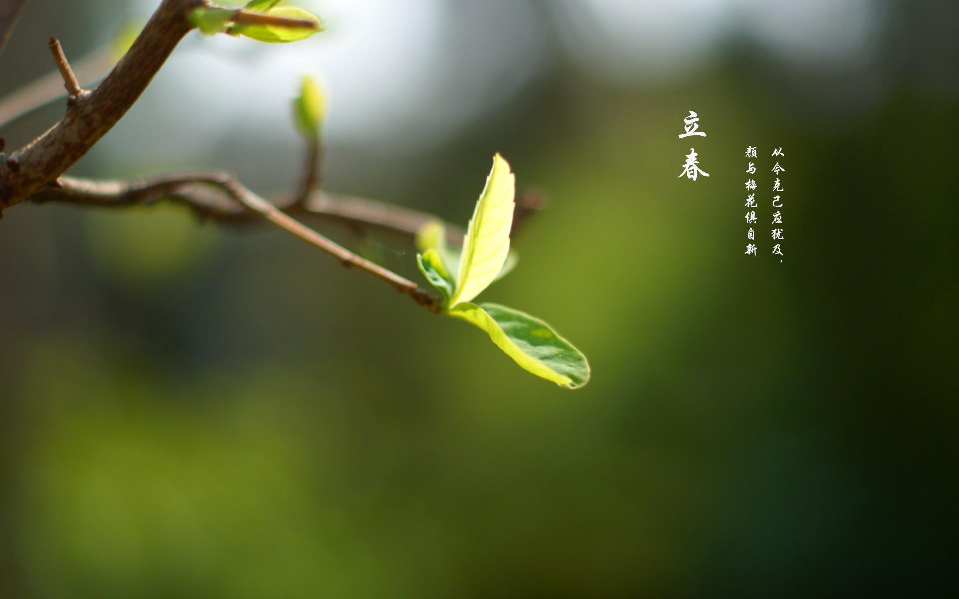 立春清新绿色护眼ppt背景图片下载