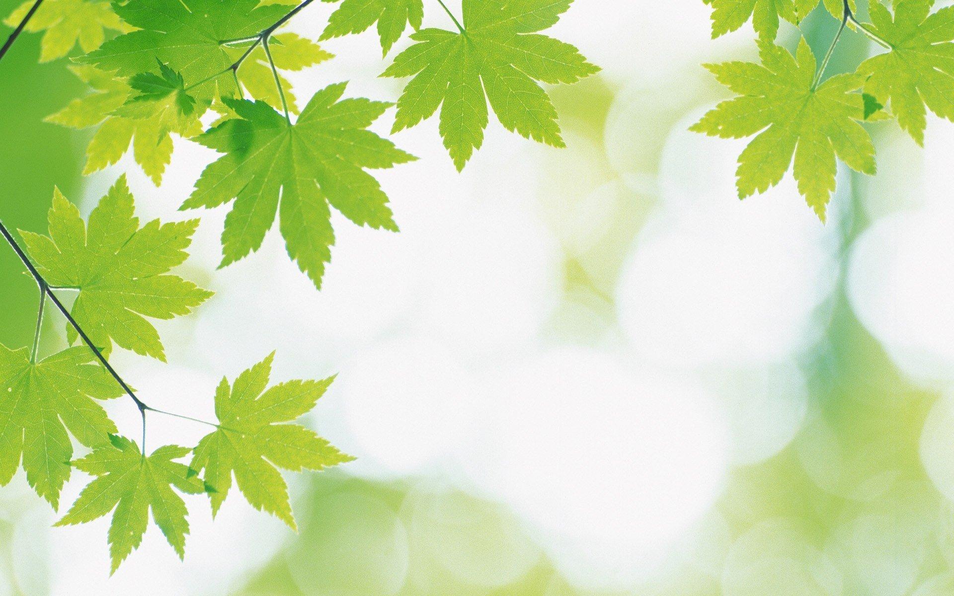 精选小清新绿色枫叶ppt背景图片下载