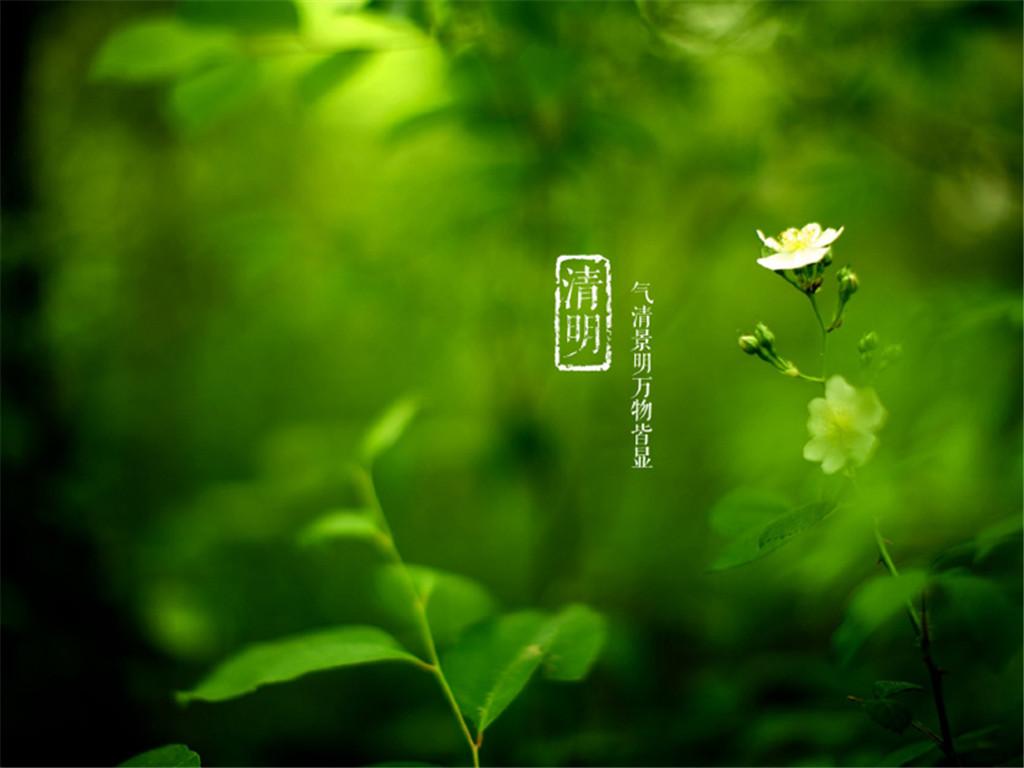绿色护眼清明节ppt背景图片下载