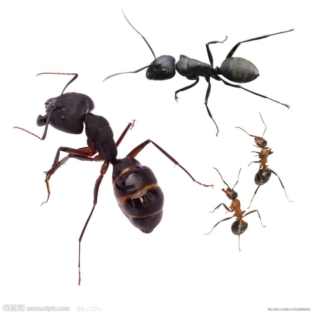 蚂蚁ppt背景图片下载