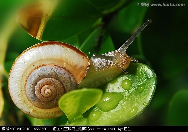蜗牛ppt背景图片下载