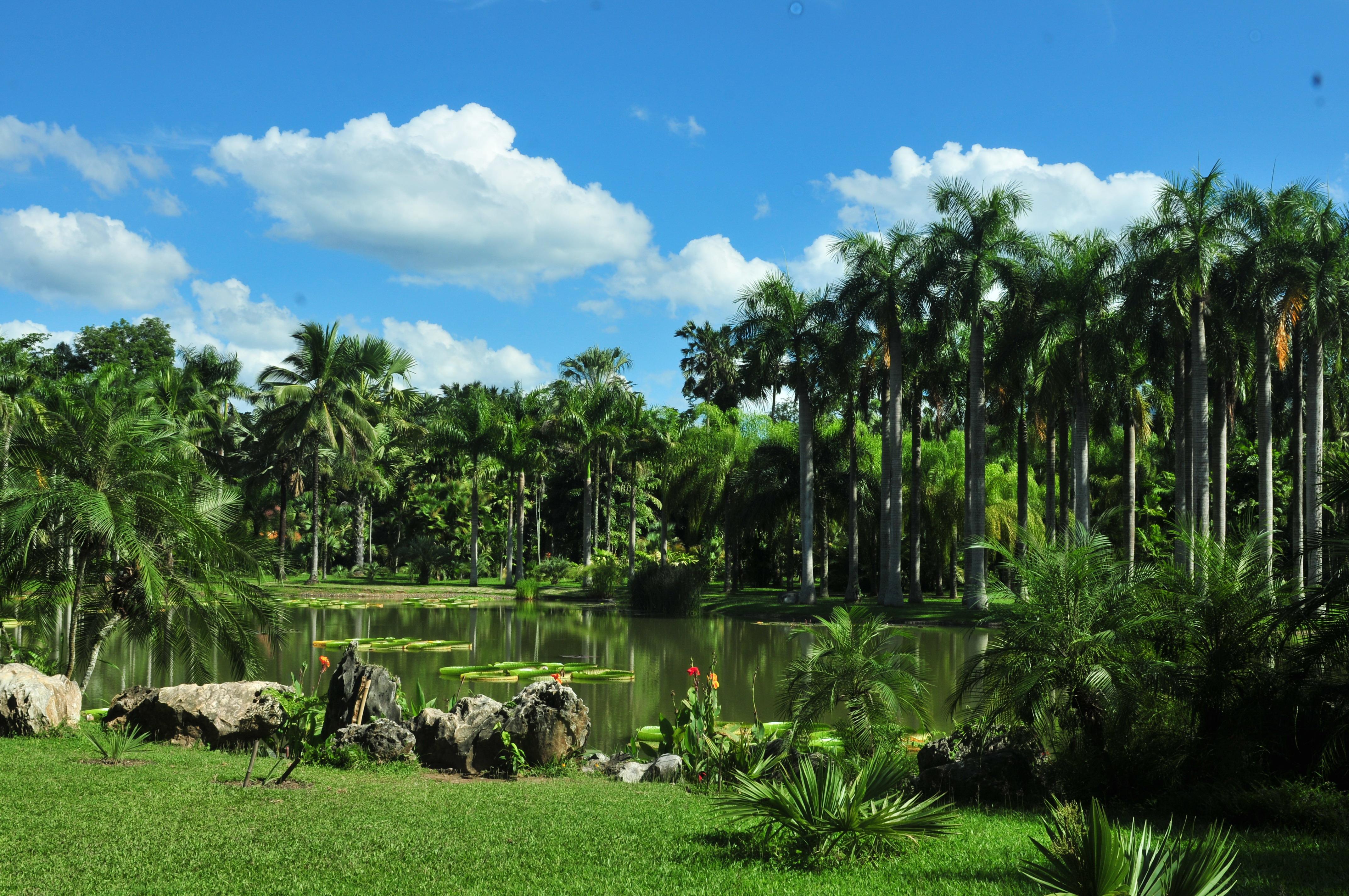 西双版纳热带植物园ppt背景图片下载