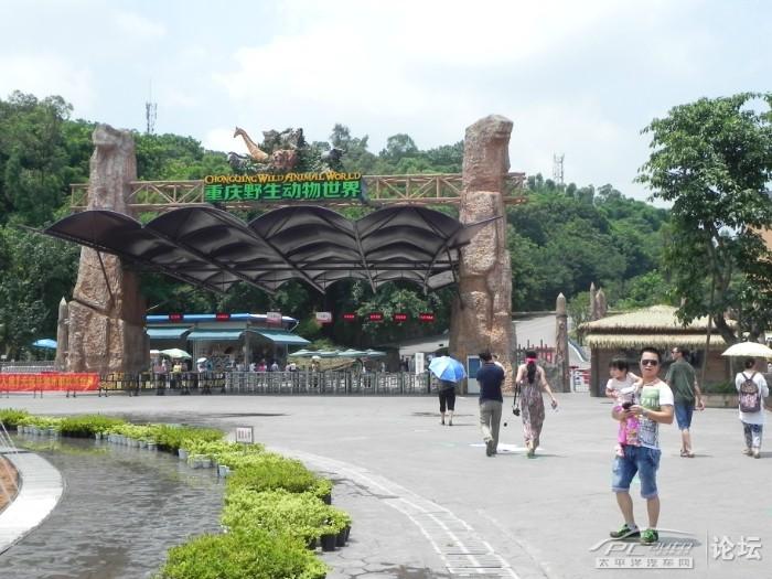 重庆野生动物世界ppt背景图片下载