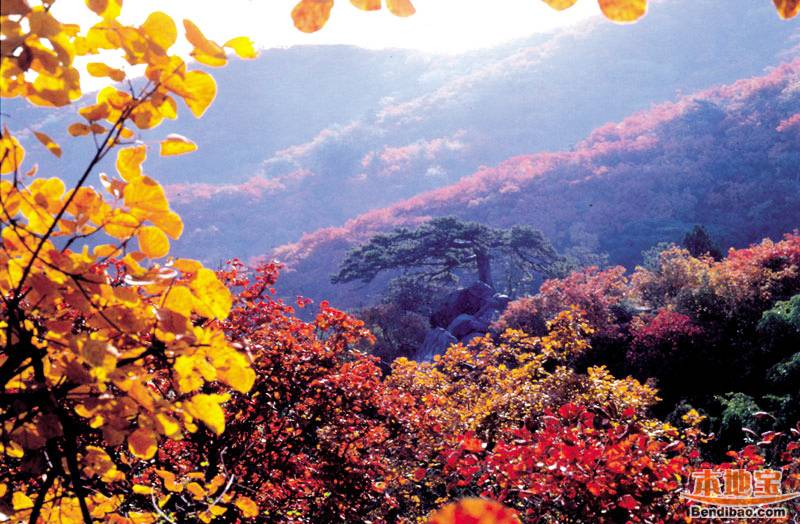 背景 壁纸 风景 绿色 绿叶 树叶 植物 桌面 800_524