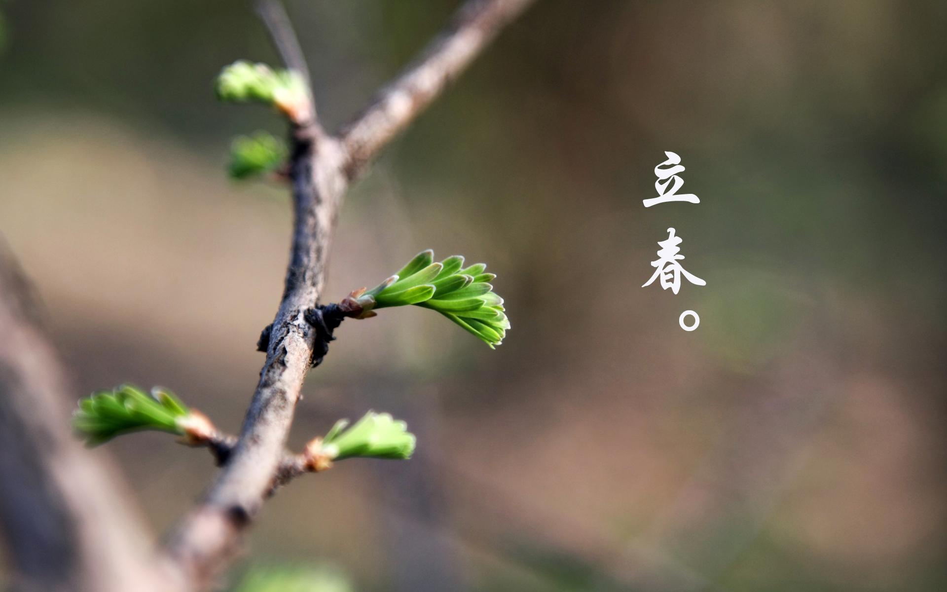 2016立春ppt背景图片下载